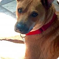 Adopt A Pet :: Casey - Costa Mesa, CA