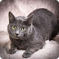 Adopt A Pet :: HANNAH - Anna, IL