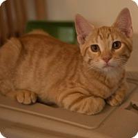 Adopt A Pet :: Barney TG - Schertz, TX