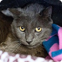 Adopt A Pet :: Jackson - San Luis Obispo, CA