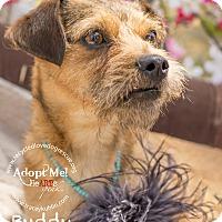 Adopt A Pet :: BUDDY - Inland Empire, CA