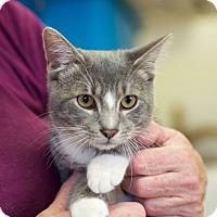 Adopt A Pet :: Champ - Huntsville, AL