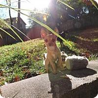 Adopt A Pet :: Pepe - Omaha, NE