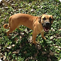 Adopt A Pet :: GOLDIE GIRL - Morris, IL