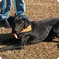 Adopt A Pet :: Blacky - Carthage, NC