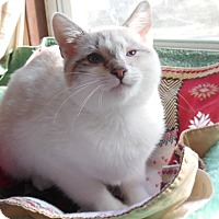 Adopt A Pet :: Maui - Media, PA