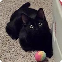 Adopt A Pet :: Linus - Midvale, UT