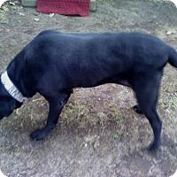 Adopt A Pet :: Maya - Palatine/Kildeer/Buffalo Grove, IL