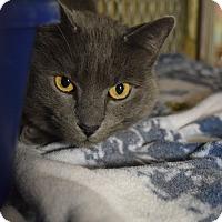 Adopt A Pet :: Basil - Bay Shore, NY