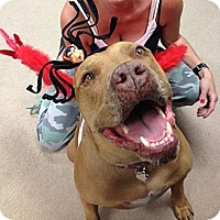 Adopt A Pet :: CHOPPERS - Studio City, CA