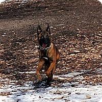 Adopt A Pet :: Ranger - Grand Rapids, MI