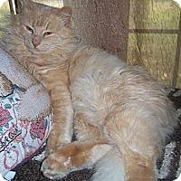 Adopt A Pet :: Nilla - Ennis, TX