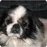 Adopt A Pet :: Yoshi - Mays Landing, NJ
