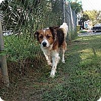 Adopt A Pet :: Asbury - Sarasota, FL