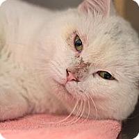 Adopt A Pet :: Houdini - Sacramento, CA