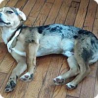 Adopt A Pet :: Benjamin - Bardonia, NY