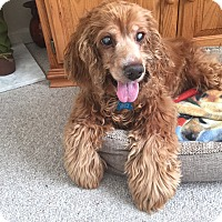 Adopt A Pet :: Abby - Wilmington, DE