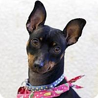 Adopt A Pet :: Ruby - Ile-Perrot, QC