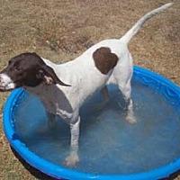 Adopt A Pet :: Dillinger - Seguin, TX