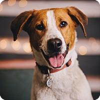 Adopt A Pet :: Lil Anne - Portland, OR