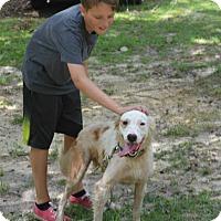 Adopt A Pet :: Fancy - Daleville, AL