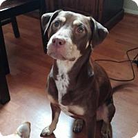 Adopt A Pet :: Mocha - Lodi, CA