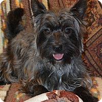 Adopt A Pet :: GOLDENHEART IN TX - Fort Worth, TX