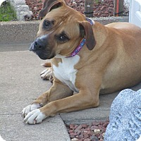 Adopt A Pet :: Carly - New Oxford, PA