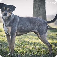 Adopt A Pet :: Cinnamon - Nassau Bay, TX