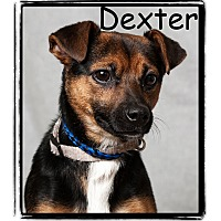 Adopt A Pet :: Dexter - Warren, PA