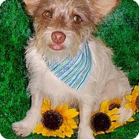 Adopt A Pet :: Hero - Irvine, CA