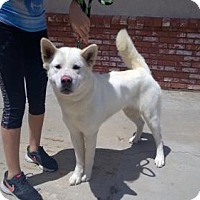 Adopt A Pet :: Angel - Santa Clarita, CA