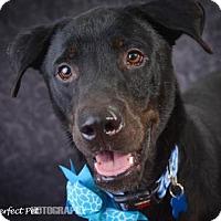 Adopt A Pet :: Thomas - Miami, FL
