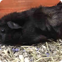 Adopt A Pet :: *Urgent* Berry - Fullerton, CA