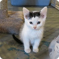 Adopt A Pet :: Noodles - Geneseo, IL