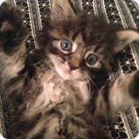 Adopt A Pet :: Dian - River Edge, NJ