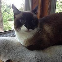 Adopt A Pet :: Thai - St. Paul, MN