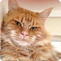 Adopt A Pet :: LESTER - San Diego, CA