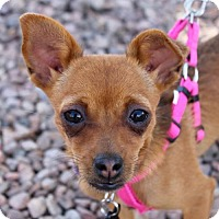 Adopt A Pet :: Lucy - Albuquerque, NM
