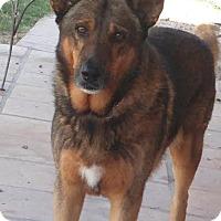 Shepherd (Unknown Type)/German Shepherd Dog Mix Dog for adoption in Chandler, Arizona - CHARLIE