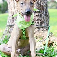 Adopt A Pet :: Barton - Castro Valley, CA