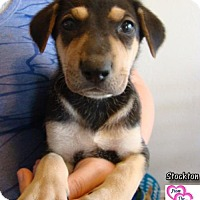 Adopt A Pet :: Stockton - Canutillo, TX