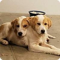 Adopt A Pet :: Christmas - Oswego, IL