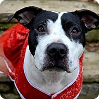 Adopt A Pet :: Penny - Pittsburgh, PA