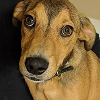 Adopt A Pet :: Kris - Brattleboro, VT