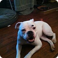 Adopt A Pet :: Magoo - Keswick, ON