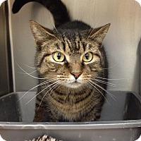Adopt A Pet :: T-9 - Triadelphia, WV