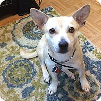 Adopt A Pet :: Liza - Adoption Pending - Gig Harbor, WA
