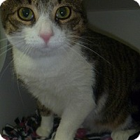 Adopt A Pet :: Lolita - Hamburg, NY