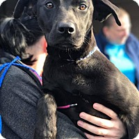 Adopt A Pet :: April Ludgate - Brooklyn, NY